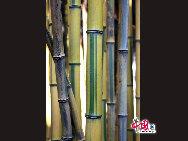 ユニークな紋様がある竹