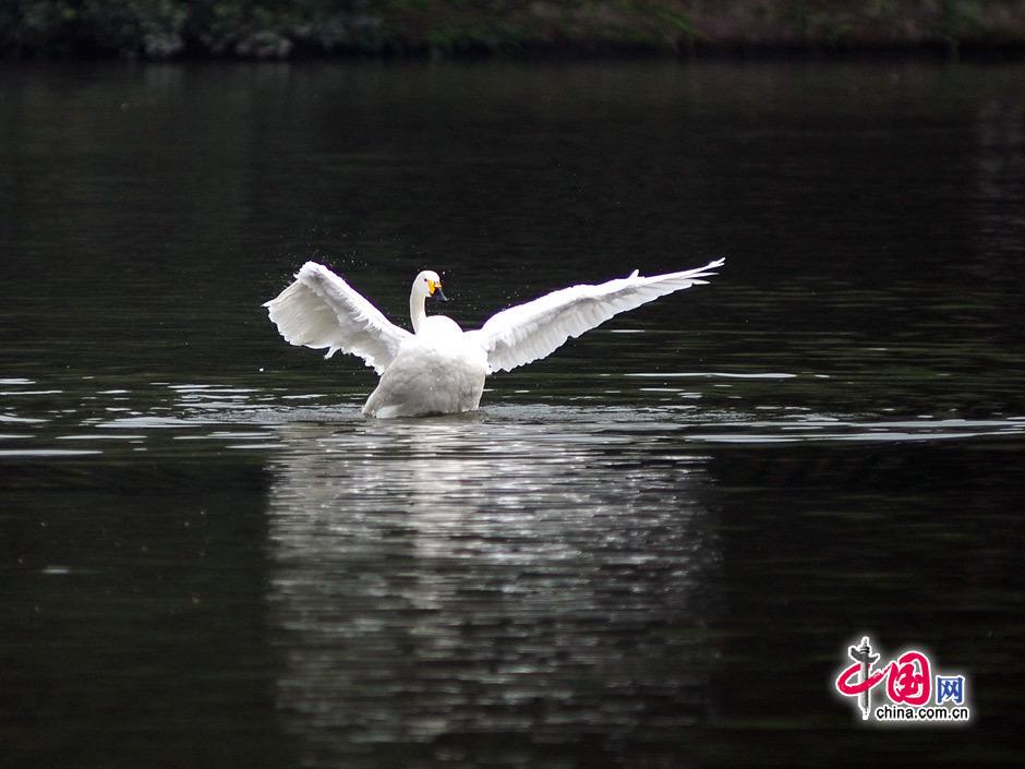 西湖 (杭州市)の画像 p1_37