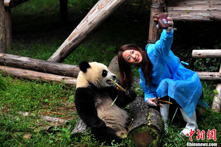 パンダの画像 p1_32