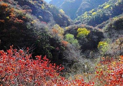 神農架林区の画像 p1_9