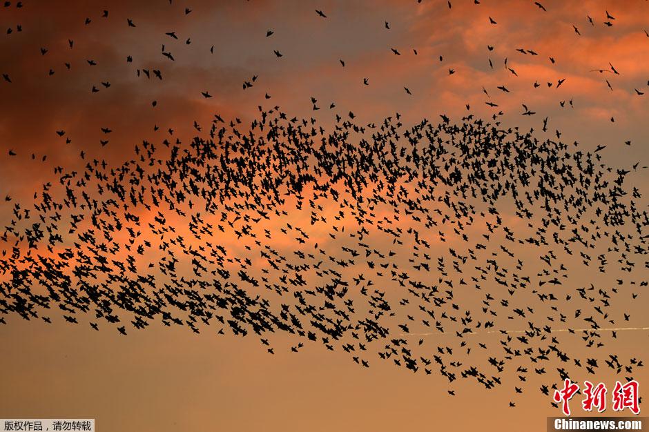 壮観 ローマの空を覆う100万羽規模の鳥の大群