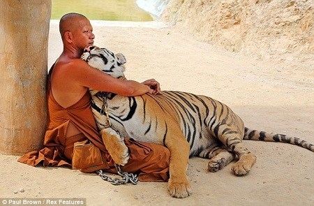 タイ トラ に対する画像結果