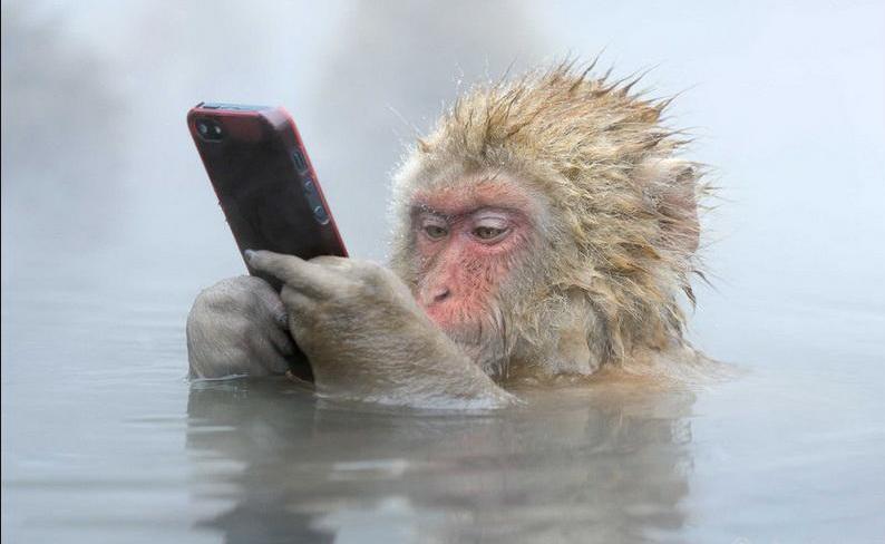 日本一猴子边泡温泉边玩手机照片获摄影奖