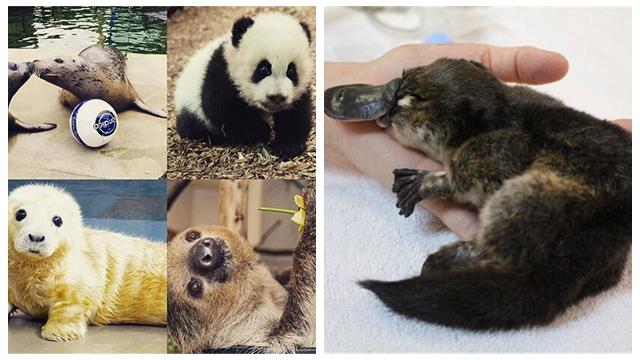 世界の動物園、かわいい動物の写真を公開