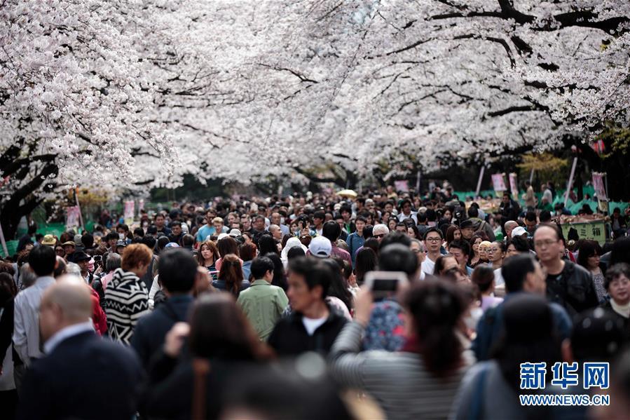 東京、また桜の満開シーズンを迎える