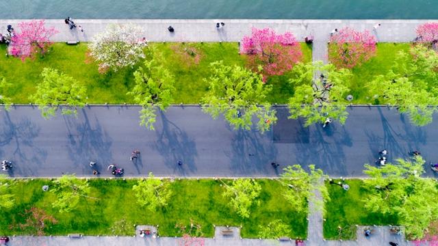 最も美しい白堤、桃の花と緑の柳