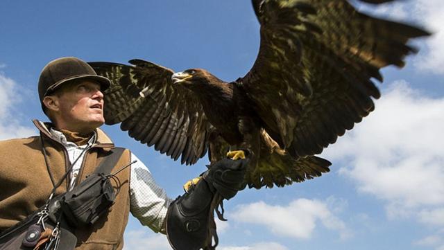 4000年前の狩猟、英国立公園で楽しむ鷹狩