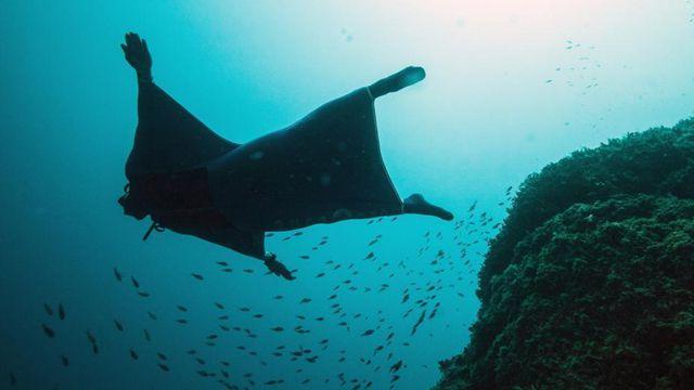 ダイバーが「海の翼」で水中を「飛行」