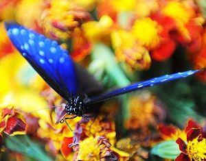 Разноцветные бабочки в туристическом районе Худецюань