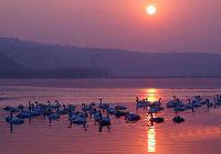 Красивые пейзажи во время рассвета на лебедином озере провинции Шаньси