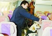 Собаки, натренированные для борьбы с наркотиками, впервые поднялись на борт самолета для проведения работы