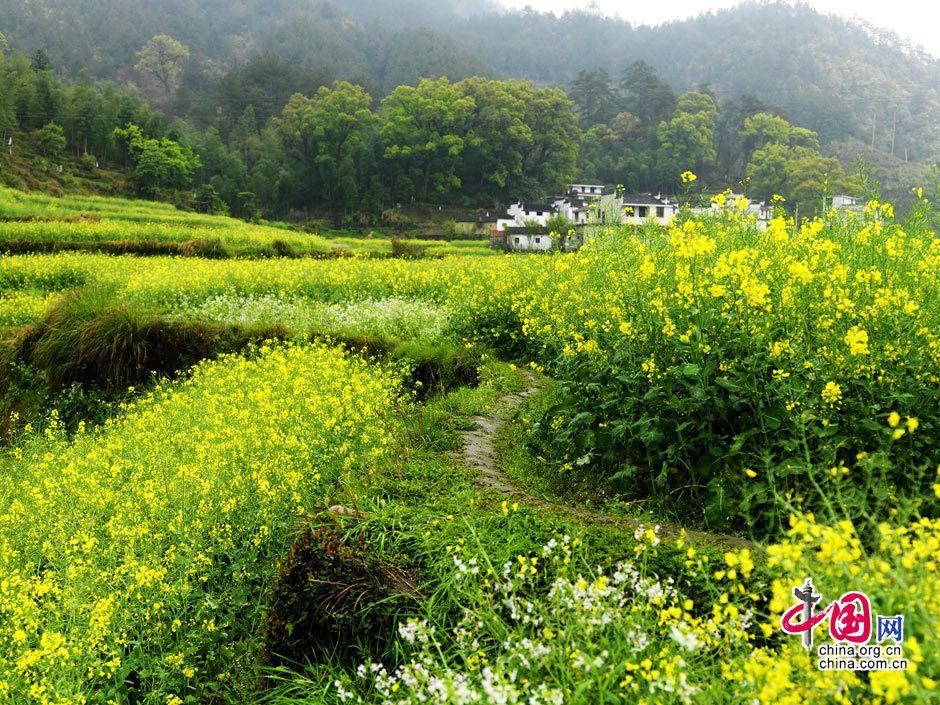 Красивые весенние пейзажи уезда уюань