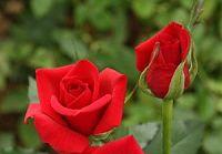 Цветы из провинции Юньнань хорошо продаются на иностранных рынках