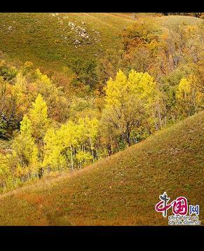 Сказочная осень горного хребта Дасинъаньлин