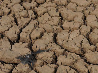 Продолжается серьезная засуха в Юго-Западном Китае