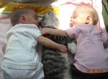 Забавные фотографии детей и кошек