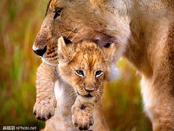 Животных и их детенышей эксклюзив