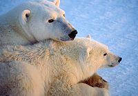 Теплые чувства животных и их детенышей