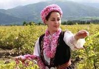 Казанлыкский Праздник розы 6