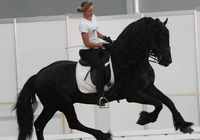 12-ая международная конная выставка