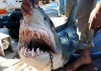 Пострадавшим от укуса акул россиянам в Египте ампутировали конечности