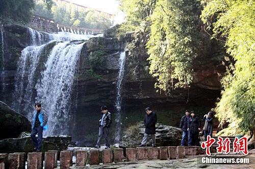 Популярная зимняя достопримечательность – море бамбука на юге провинции Сычуань