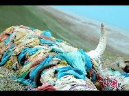 Красота тибетского озера Cho Yong