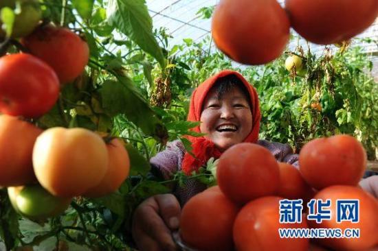 Значительный рост доходов китайских крестьян в минувшем 2010 году