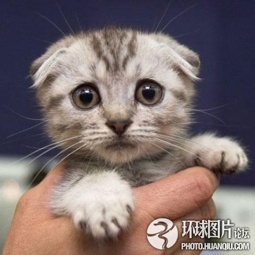 фото кошачьи морды