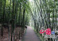 Земной рай – живописный район Сыдунгоу провинции Гуйчжоу