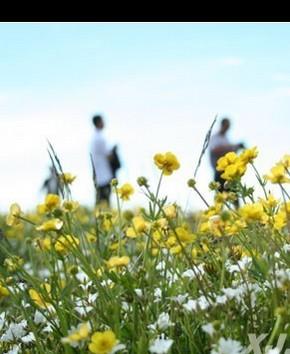 «Сад в небе» Синьцзяна привлекает к себе туристов