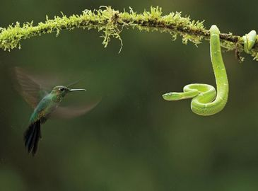 Наилучшие произведения Международного конкурса природной фотографии 2010 года