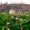 Культурно-ландшафтные районы озера Сиху в Ханчжоу внесены в 'Реестр объектов мирового наследия'