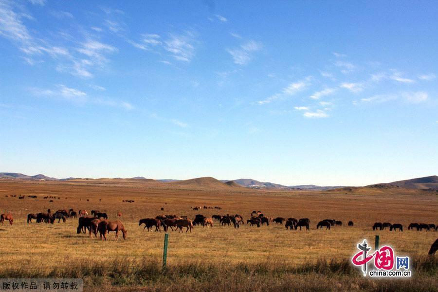 Жемчужина степи – ипподром военных лошадей «Хуншань»
