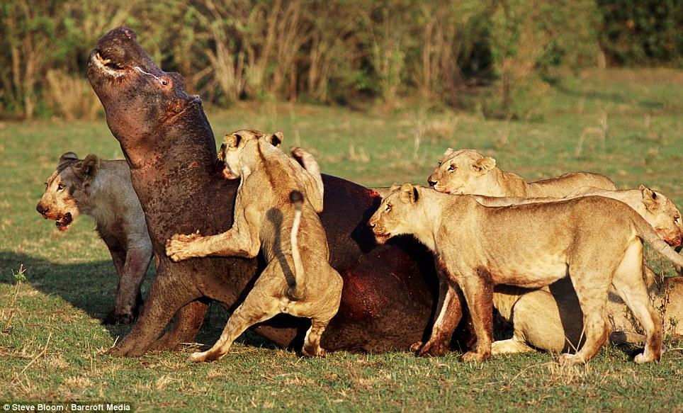 смотреть про диких животных: