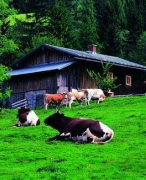 Самые красивые фермы мира
