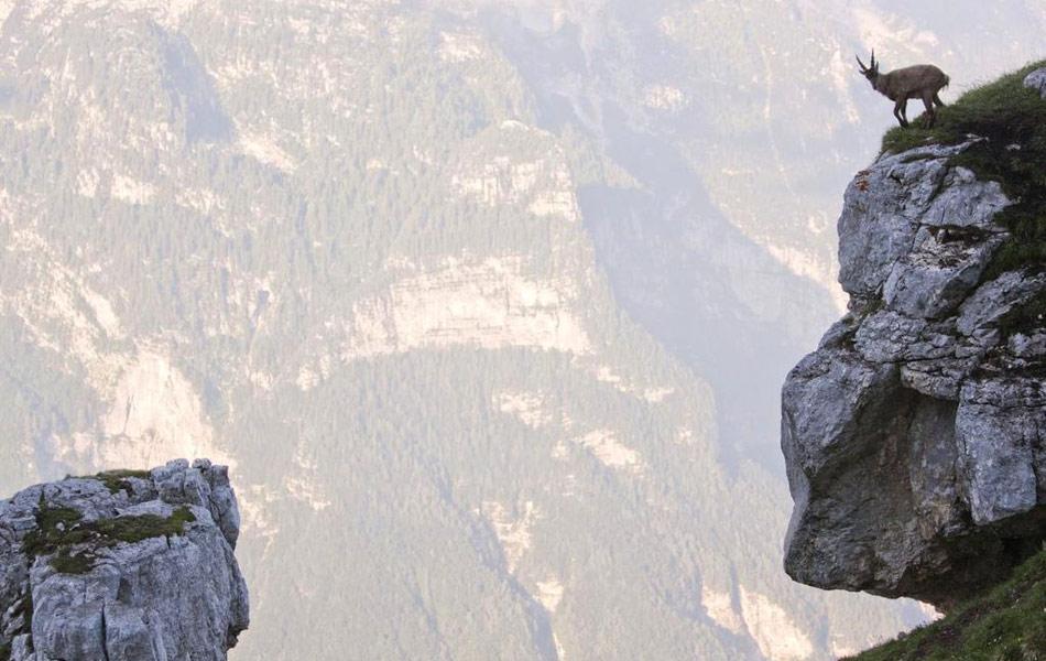 Самые смелые козлы мира: бой на отвесной скале 3
