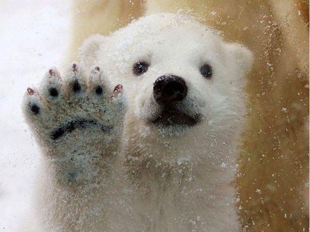 Самые милые животные в 2011 году