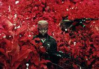 Розовый Конго в объективе фотографа