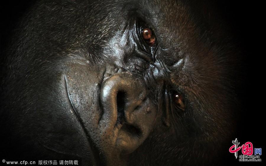 Испания: Рай диких животных - Кантабрия3