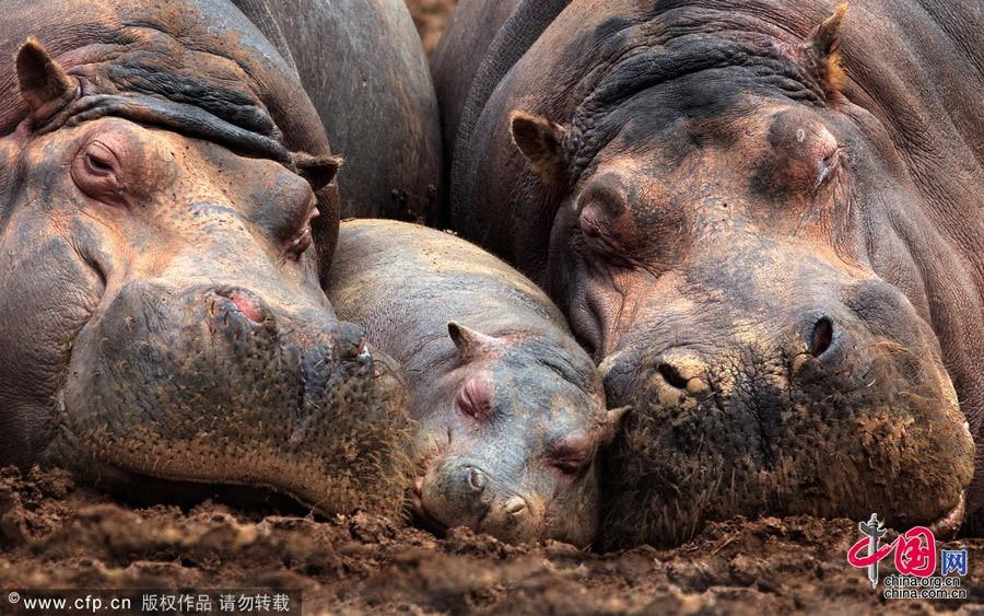 Испания: Рай диких животных - Кантабрия4
