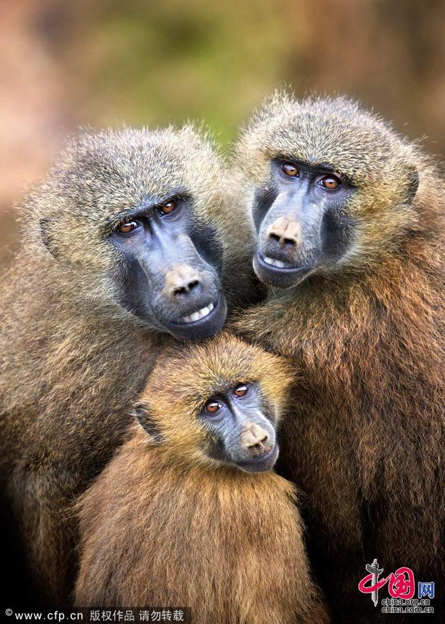 Испания: Рай диких животных - Кантабрия6