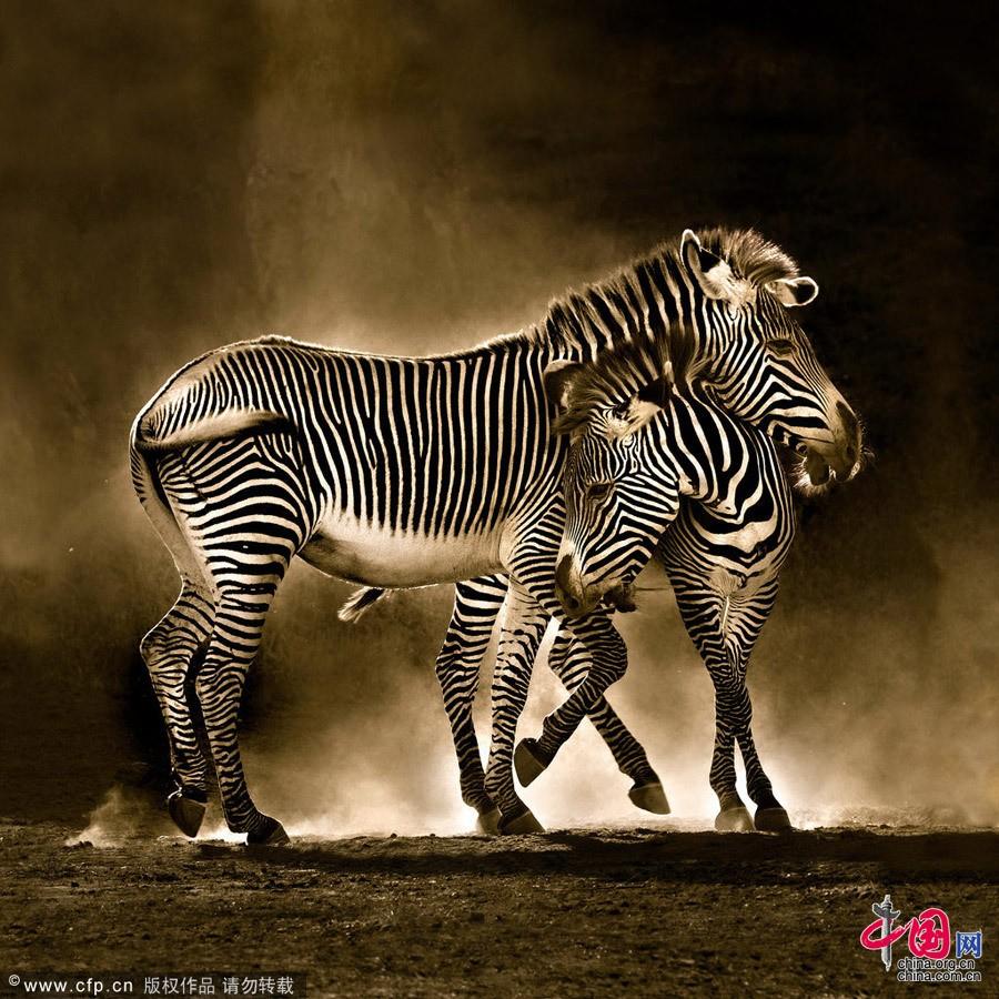 Испания: Рай диких животных - Кантабрия10