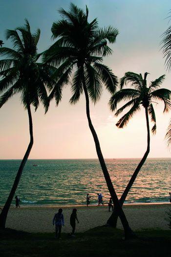 Восточные Гавайи – Хайнань