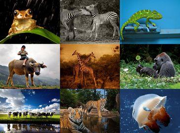50 лучших фото животных от журнала «National Geographic»