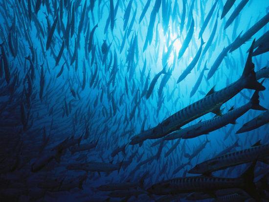 Лучшие фото от «National Geographic» - Синий цвет в жизни 1