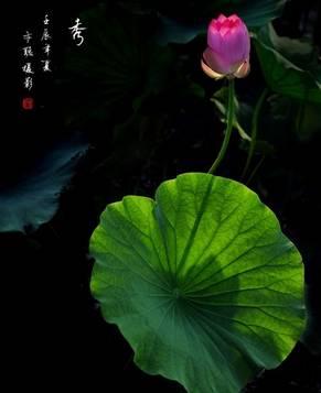 Красивый лотос в стиле китайской живописи «гохуа»