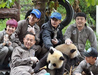 Фото: Звезды и большие панды
