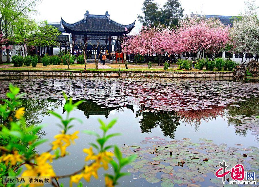 Провинция цзянсу красивые цветы