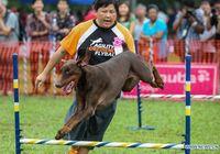 В Куала-Лумпуре проходит 'Собачий марафон'
